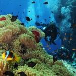 Mon parcours de plongeuse