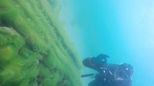 Plongée dans le Lac Baikal2