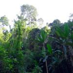 Luang Namtha et le nord du Laos : un sentiment ambigu
