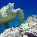 Plonger à Bornéo : Sipadan et les iles environnantes