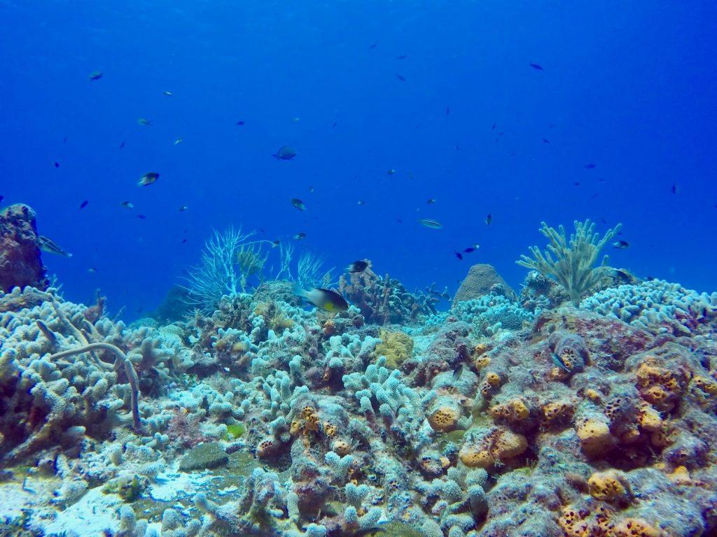 Récif corallien plongée cozumel
