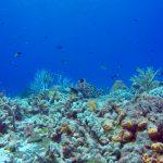 Plonger à Cozumel avec les requins nourrices et les tortues