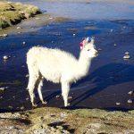 4 jours d'excursion dans le sud Lipez et le Salar d'Uyuni