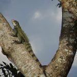 Iquitos : nouvelle excursion dans les profondeurs de la forêt amazonienne