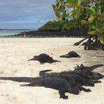 Les Galápagos : une semaine extraordinaire !