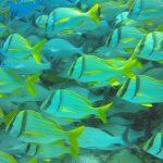 Plonger à Playa del Carmen : sympathique, mais sans plus